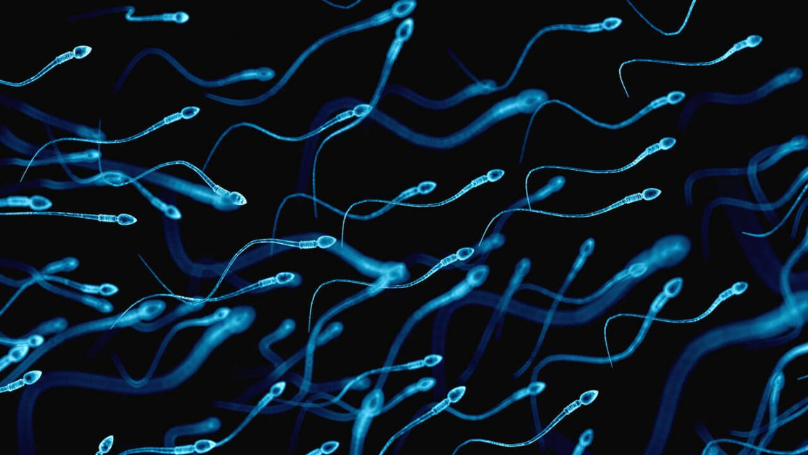 What Is Sperm Motility